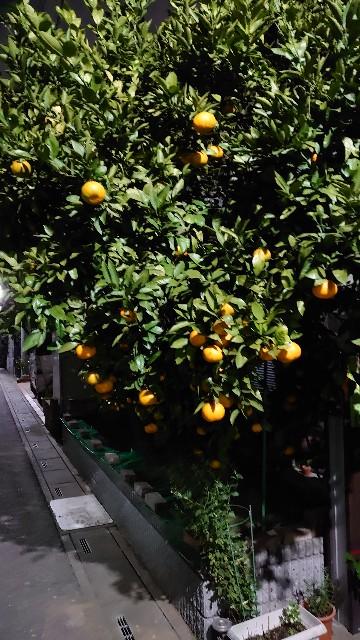f:id:kiha-gojusan-hyakusan:20201108212327j:image