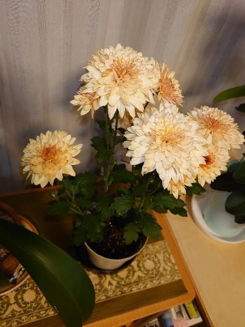 f:id:kiha-gojusan-hyakusan:20201108213127j:image