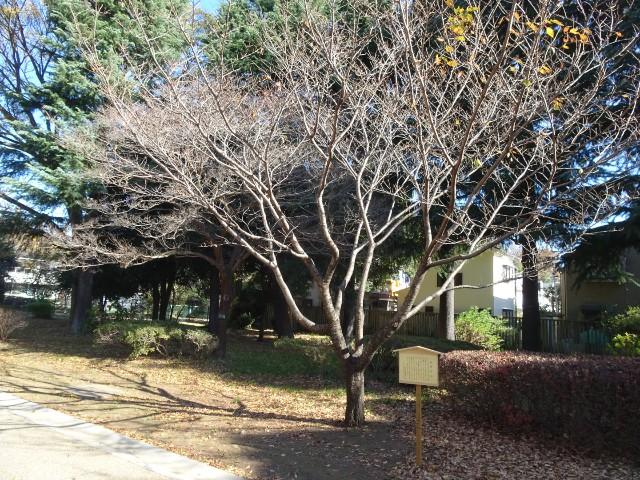 f:id:kiha-gojusan-hyakusan:20201122000447j:image