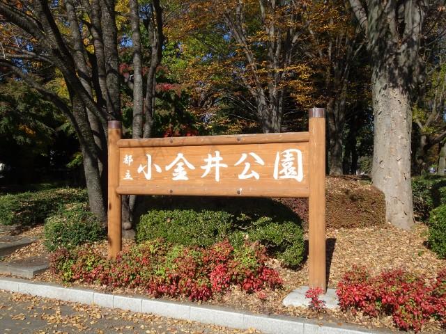 f:id:kiha-gojusan-hyakusan:20201122000625j:image