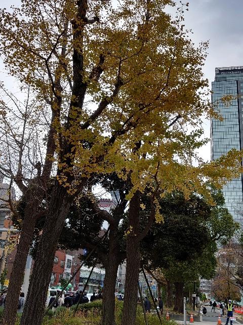 f:id:kiha-gojusan-hyakusan:20201124191726j:image