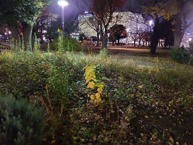 f:id:kiha-gojusan-hyakusan:20201211182322j:image