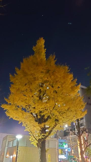 f:id:kiha-gojusan-hyakusan:20201214215940j:image