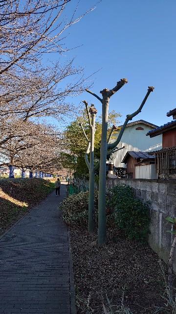 f:id:kiha-gojusan-hyakusan:20210102020336j:image