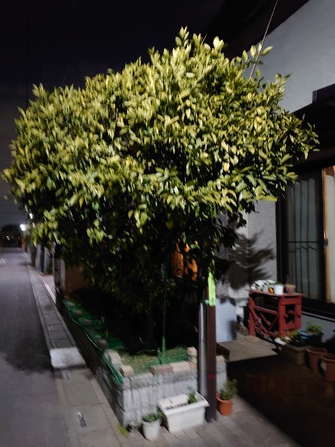 f:id:kiha-gojusan-hyakusan:20210127122832j:image
