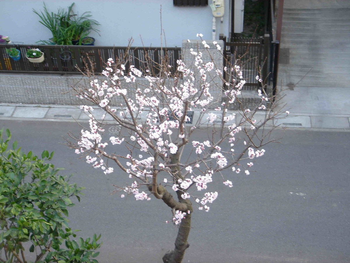 f:id:kiha-gojusan-hyakusan:20210127220502j:plain