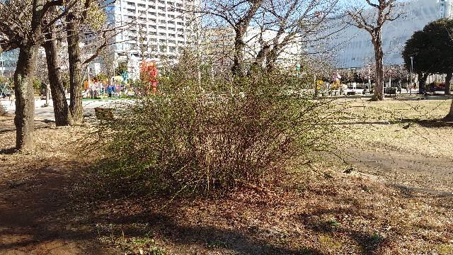 f:id:kiha-gojusan-hyakusan:20210218084445j:image