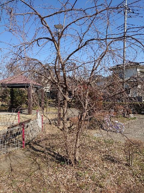 f:id:kiha-gojusan-hyakusan:20210228022755j:image