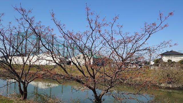 f:id:kiha-gojusan-hyakusan:20210228201006j:image