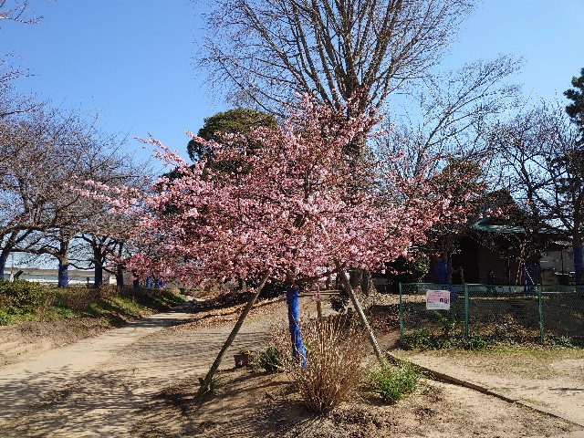 f:id:kiha-gojusan-hyakusan:20210228201226j:image
