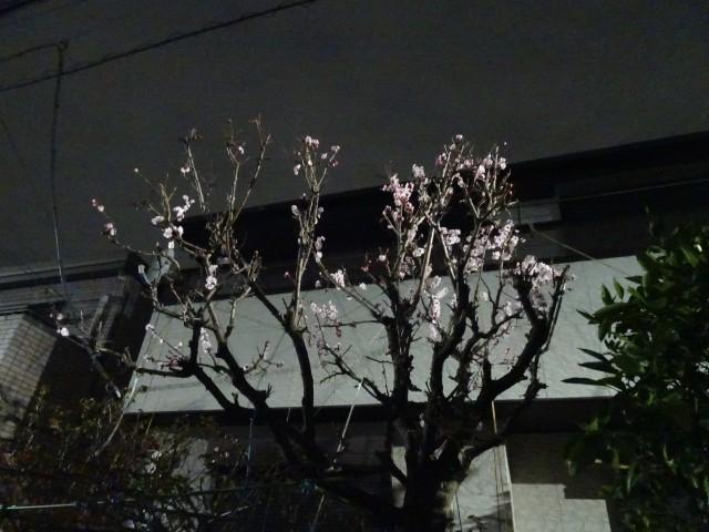 f:id:kiha-gojusan-hyakusan:20210307013519j:image