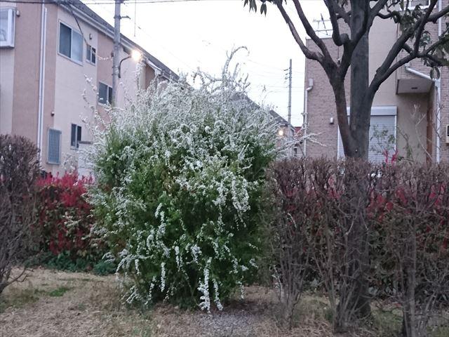 f:id:kiha-gojusan-hyakusan:20210313154458j:plain