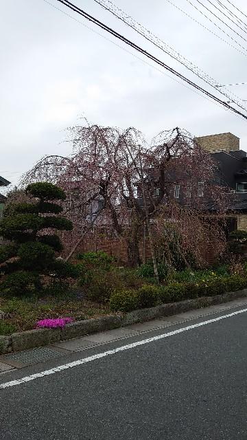 f:id:kiha-gojusan-hyakusan:20210330081300j:image