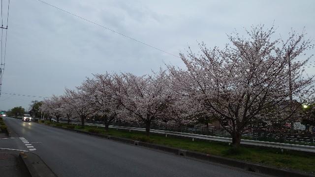 f:id:kiha-gojusan-hyakusan:20210330081325j:image