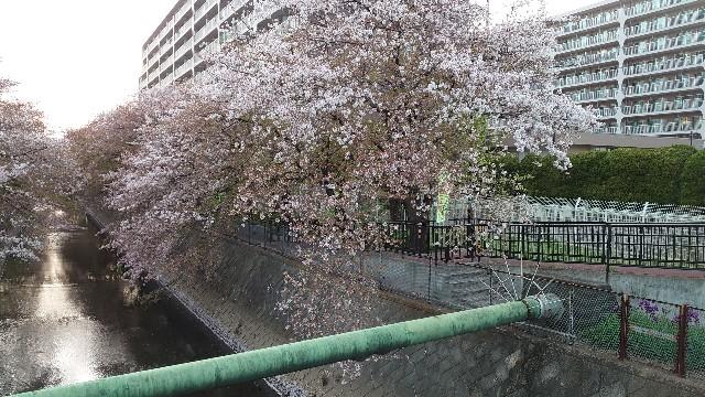 f:id:kiha-gojusan-hyakusan:20210405225837j:image