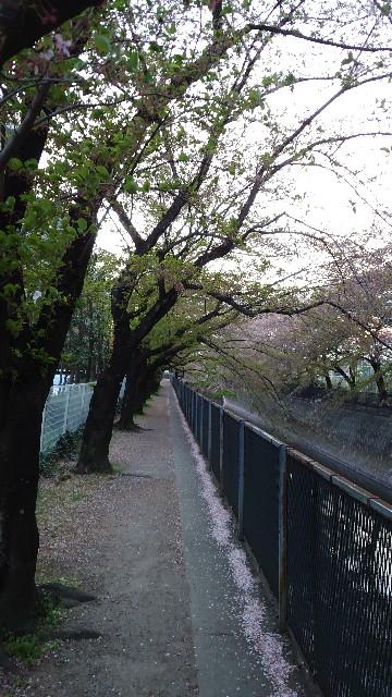 f:id:kiha-gojusan-hyakusan:20210405225858j:image