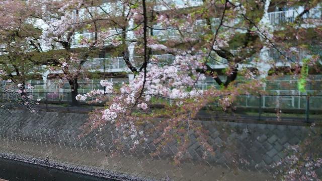 f:id:kiha-gojusan-hyakusan:20210405225930j:image