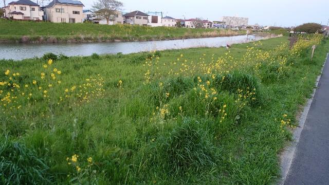 f:id:kiha-gojusan-hyakusan:20210411043738j:image