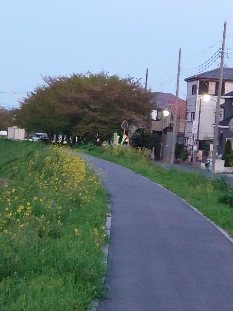 f:id:kiha-gojusan-hyakusan:20210411043807j:image