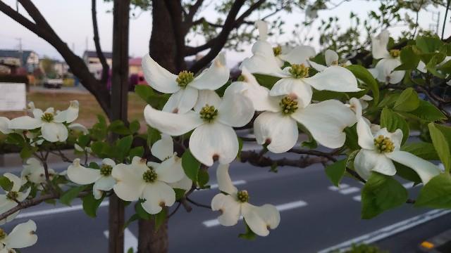 f:id:kiha-gojusan-hyakusan:20210416190907j:image