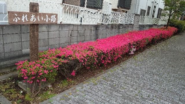 f:id:kiha-gojusan-hyakusan:20210418024604j:image