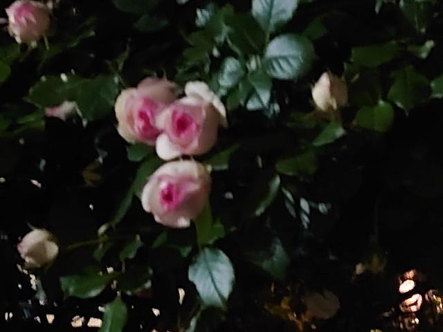 f:id:kiha-gojusan-hyakusan:20210430221340j:image