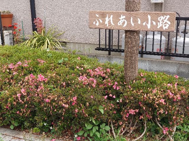 f:id:kiha-gojusan-hyakusan:20210530012919j:image