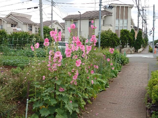 f:id:kiha-gojusan-hyakusan:20210605165410j:image