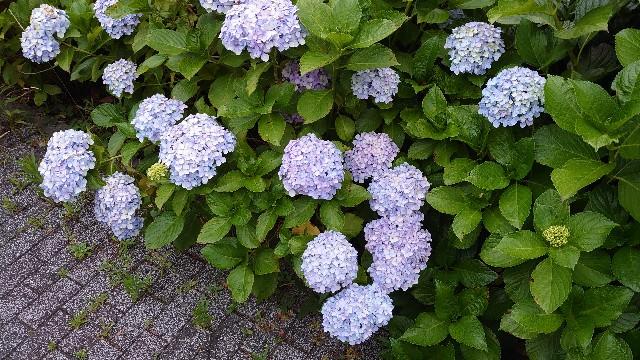 f:id:kiha-gojusan-hyakusan:20210613210459j:image
