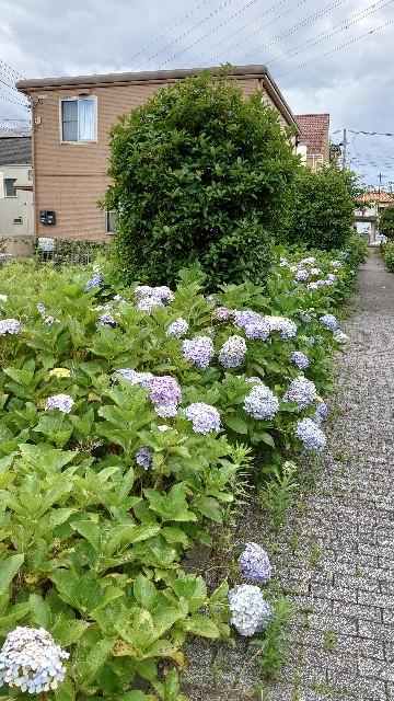 f:id:kiha-gojusan-hyakusan:20210621002752j:image