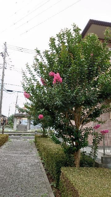 f:id:kiha-gojusan-hyakusan:20210731121805j:image