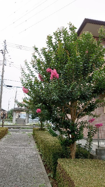 f:id:kiha-gojusan-hyakusan:20210731162130j:image