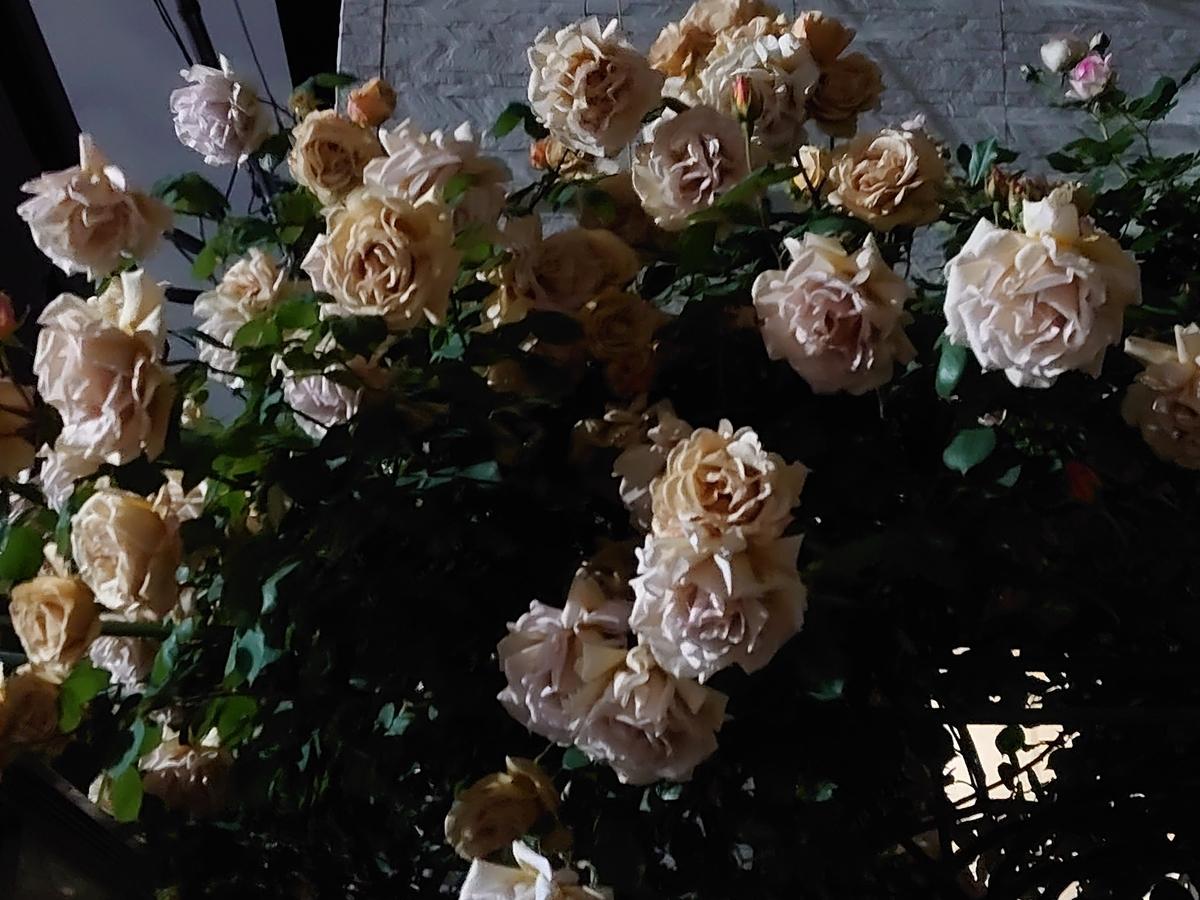 f:id:kiha-gojusan-hyakusan:20210924003159j:plain