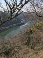 梅と川のコラボ