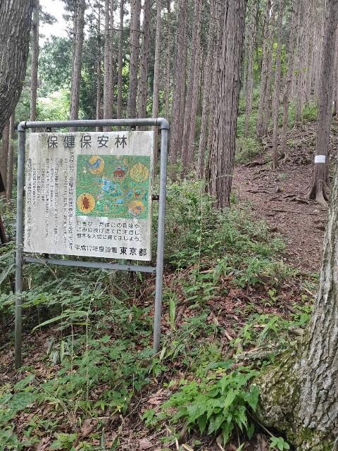 f:id:kiiroidaruma:20200704072526j:image