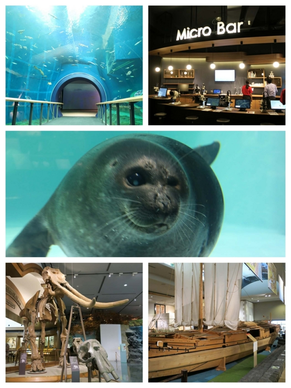 たびねす、琵琶湖博物館collage