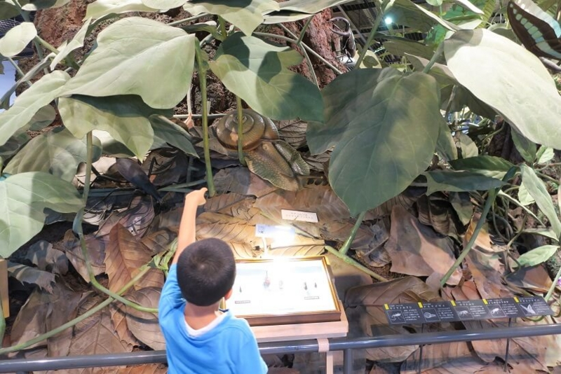 伊丹市昆虫館、10倍の森