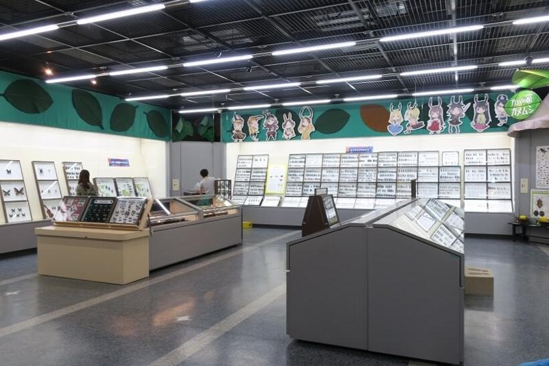 伊丹市昆虫館、特別展示室
