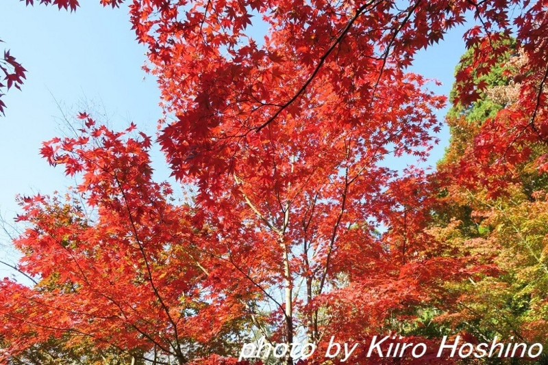 金剛輪寺、名勝庭園紅葉