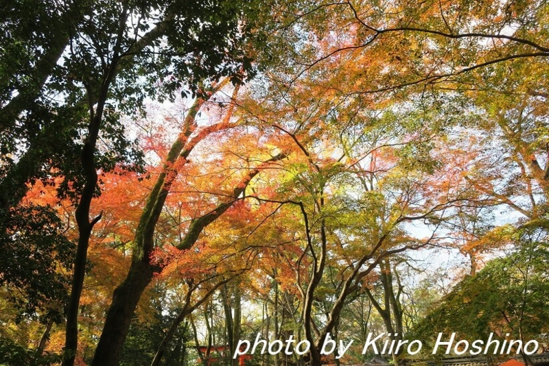 f:id:kiiroihoshi:20161207061022j:plain