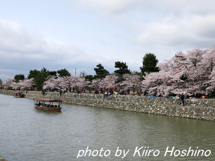 宇治川沿いの桜と船