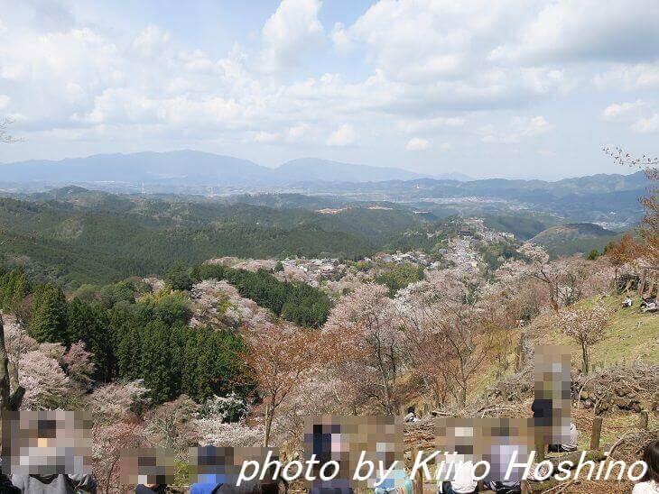 吉野桜、上千本で昼食