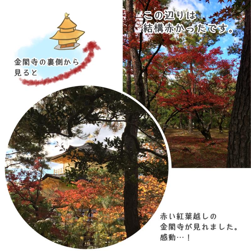 金閣寺の裏側が特にきれいに紅葉していました