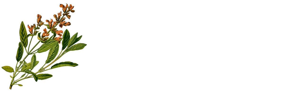 f:id:kika-treeflower:20210303143926j:plain
