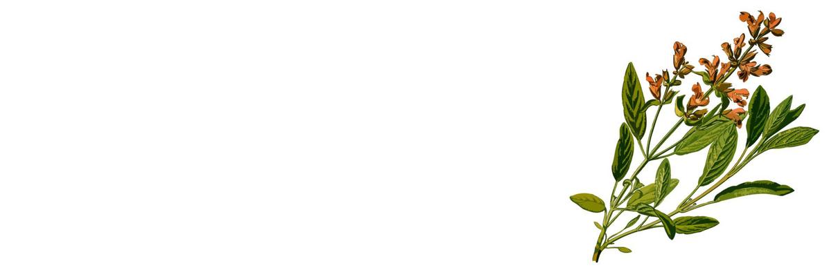 f:id:kika-treeflower:20210303143936j:plain