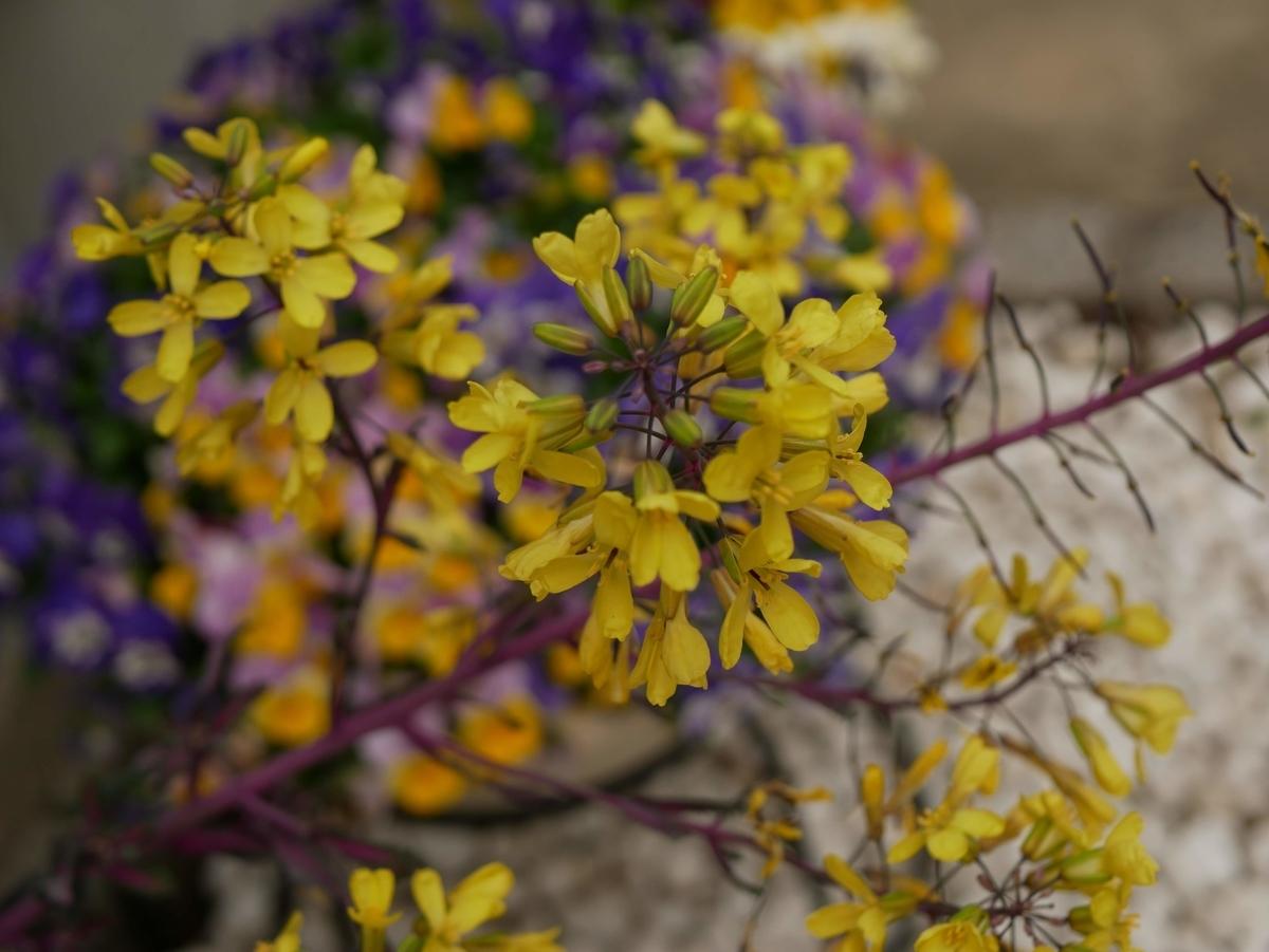 f:id:kika-treeflower:20210331204416j:plain