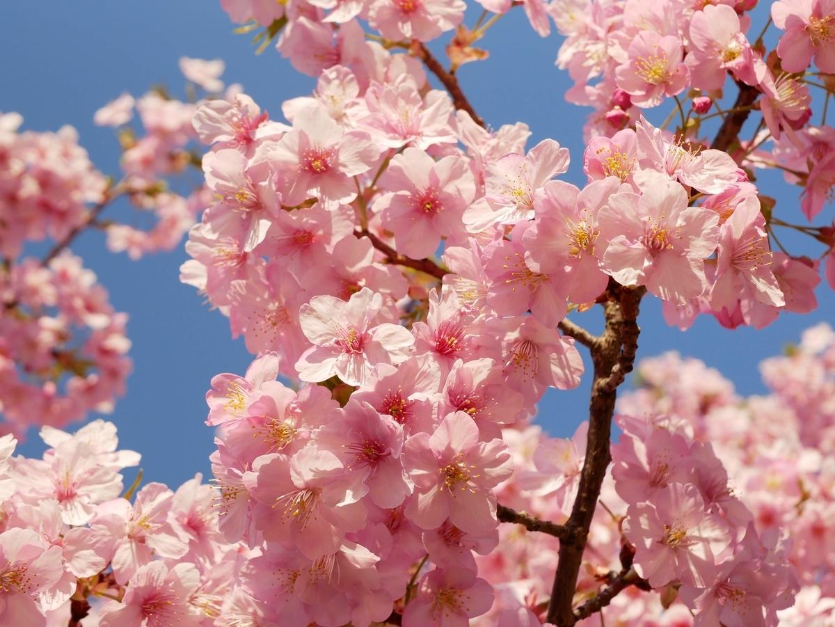 f:id:kika-treeflower:20210404213652j:plain