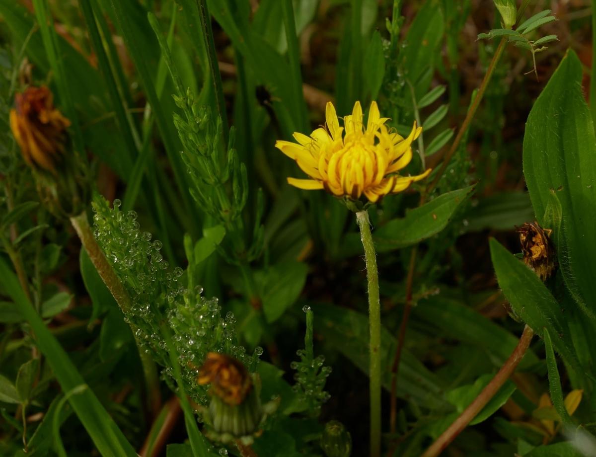 f:id:kika-treeflower:20210410103245j:plain