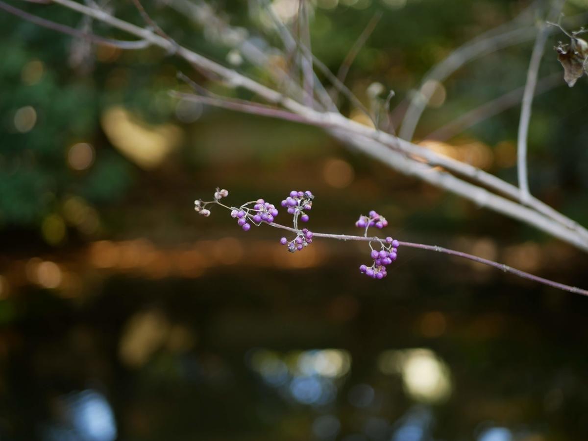 f:id:kika-treeflower:20210503093338j:plain