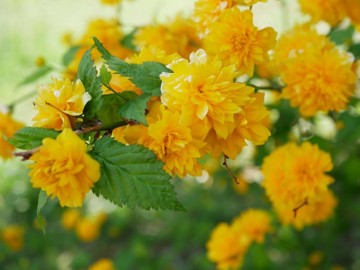 f:id:kika-treeflower:20210503102529j:plain
